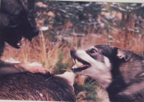 koirat 3
