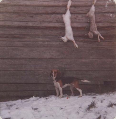 koirat 6